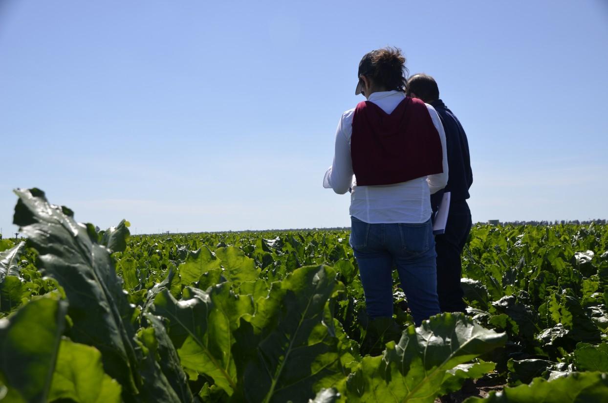 Azucarera y AgroBank lanzan la segunda edición del premio al Mejor Remolachero de Andalucía