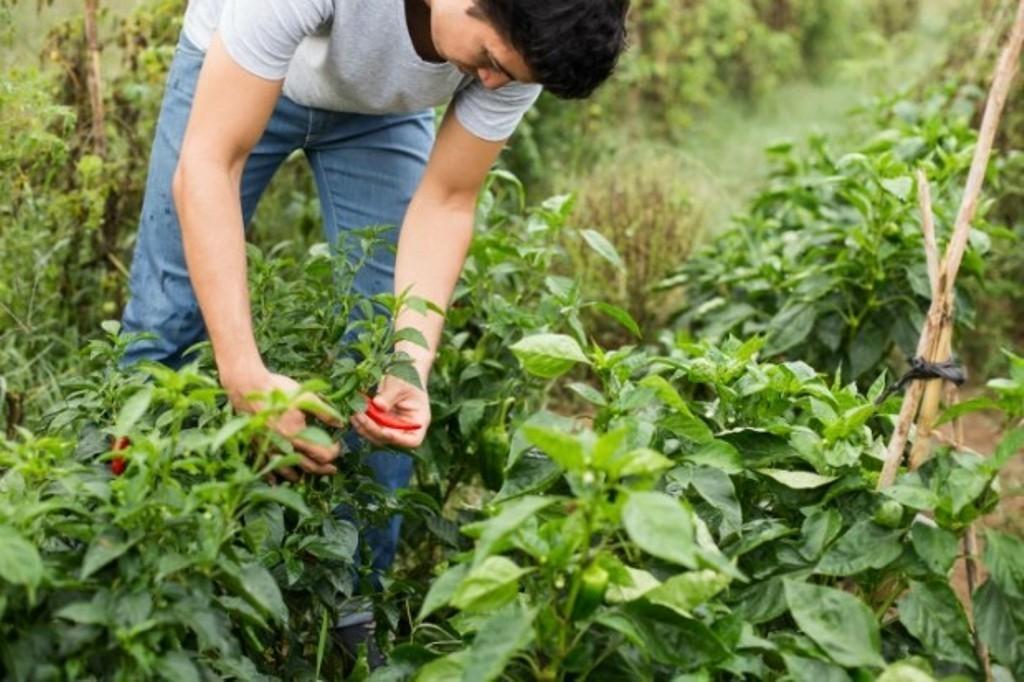 Las OPAs andaluzas solicitan más fondos para  la primera instalación de jóvenes agricultores