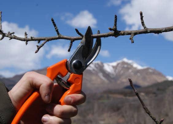 VI Jornada de poda en manzana y pera de montaña