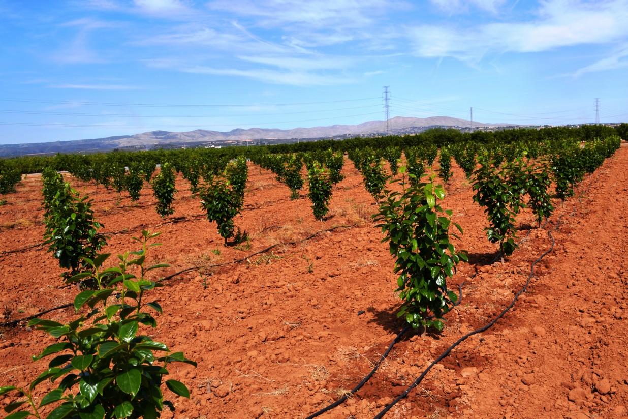La Comunidad Valenciana encabezó el abandono de tierras de cultivo en España en 2016
