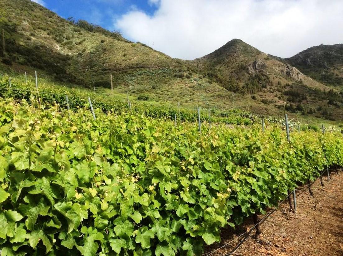 Jornada «Proyectos nacionales e internacionales en el ámbito de la I+D+I en el sector vitivinícola»