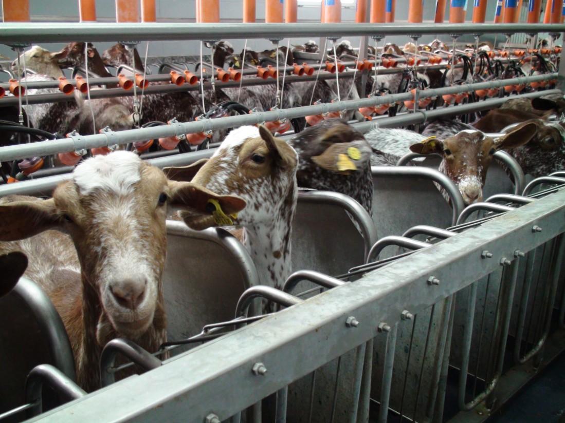 Veterinarios y ganaderos andaluces piden agilidad en la entrega de las vacunas de Lengua Azul
