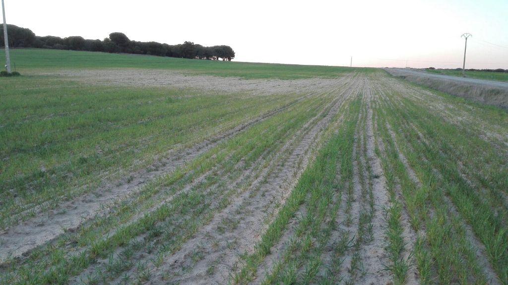 El sector agrario pide coordinación a Mapama y CC.AA. para hacer frente a la dura sequía en el campo