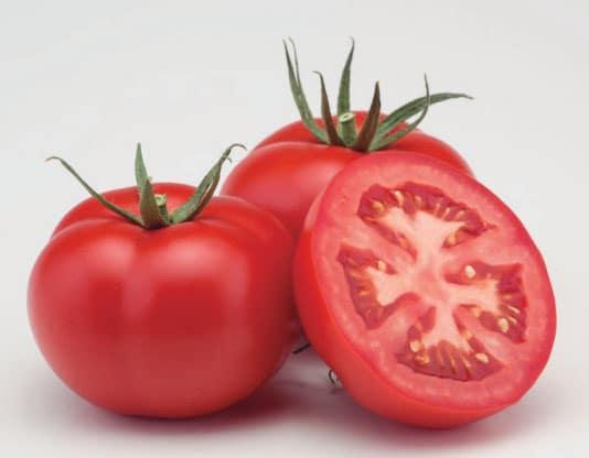 tomate bayer