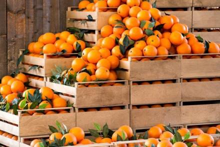 exportacion_fruta