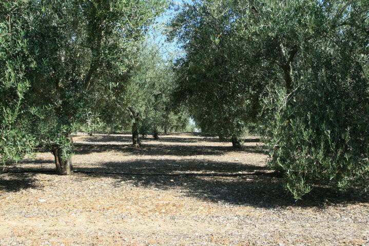 olivar (FILEminimizer)