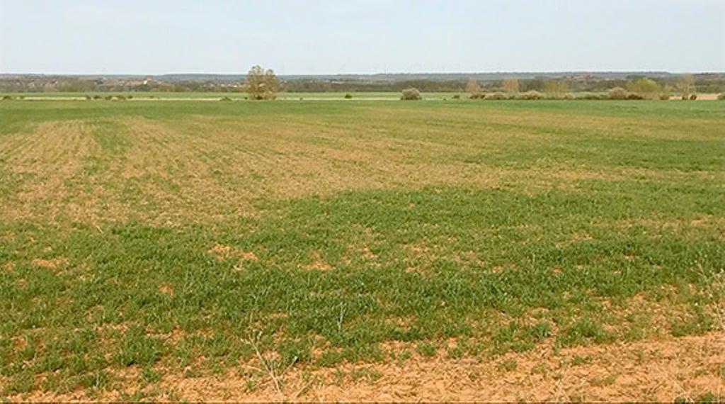 ENESA apremia a realizar las peritaciones y pagar pronto el seguro por sequía