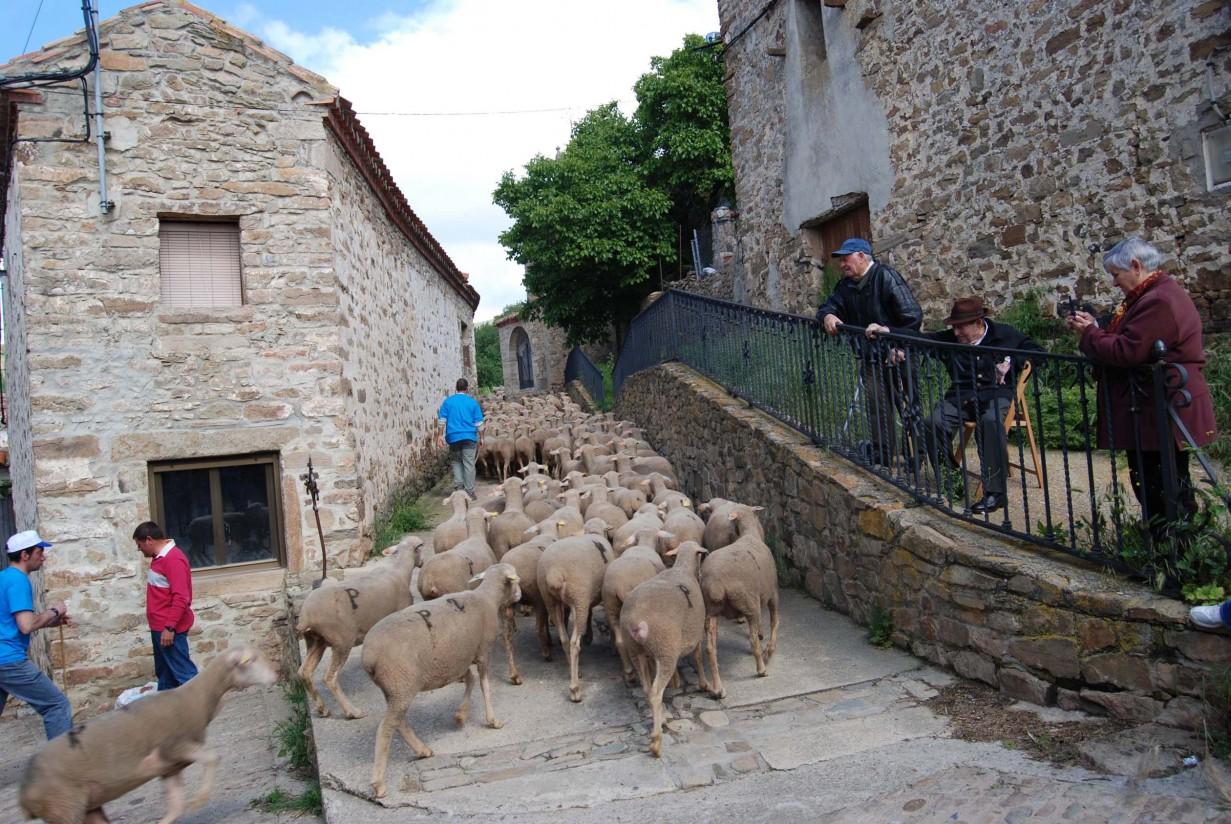 OvejoAventura: otra forma de conocer el mundo del pastor y la trashumancia en Soria