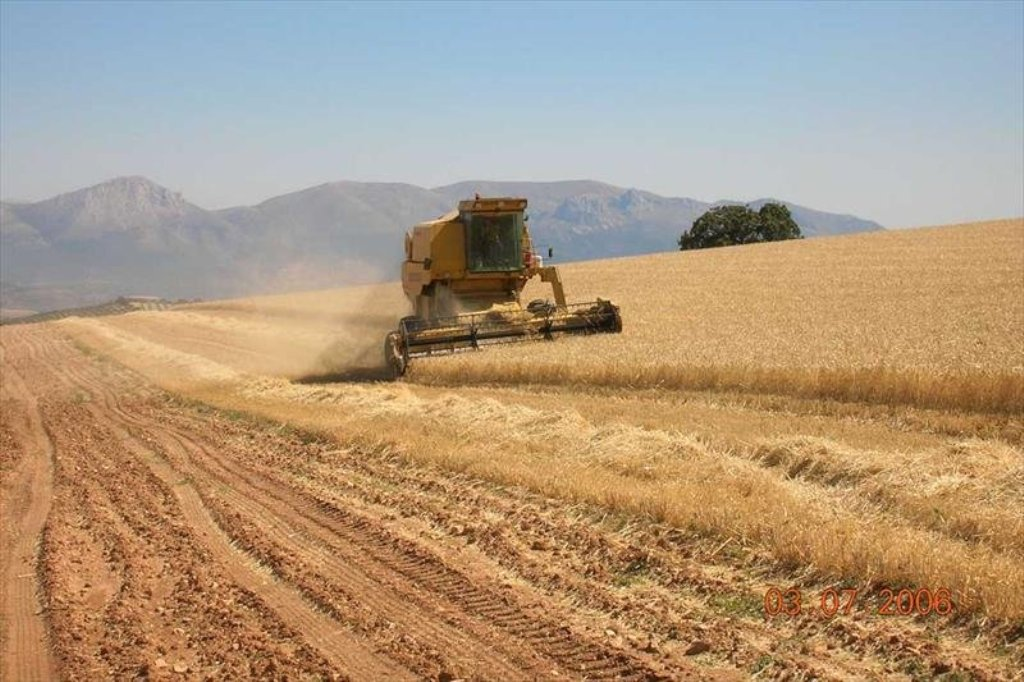 Cooperativas prevé una cosecha nacional de cereales de 15,23 Mt para la campaña 2017/18