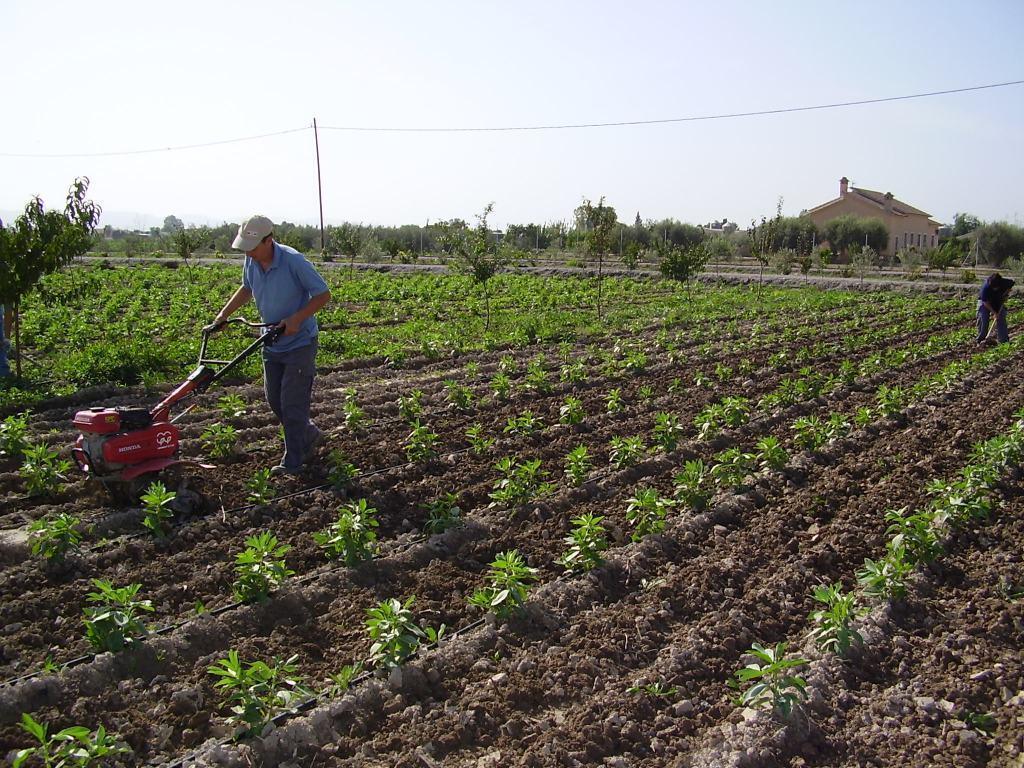 Las nuevas normas de producción y etiquetado de alimentos ecológicos de la UE, a partir del 1 de julio de 2020