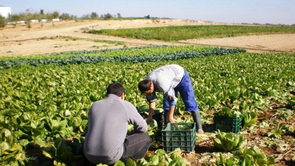 El apoyo a los jóvenes agricultores debería estar mejor orientado para favorecer el relevo generacional en el campo