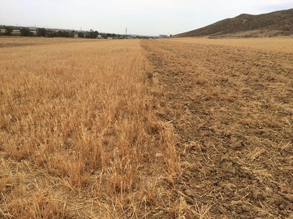 UPA y Agroseguro se enfrentan por una cláusula que reduce la indemnización en el seguro de cereales