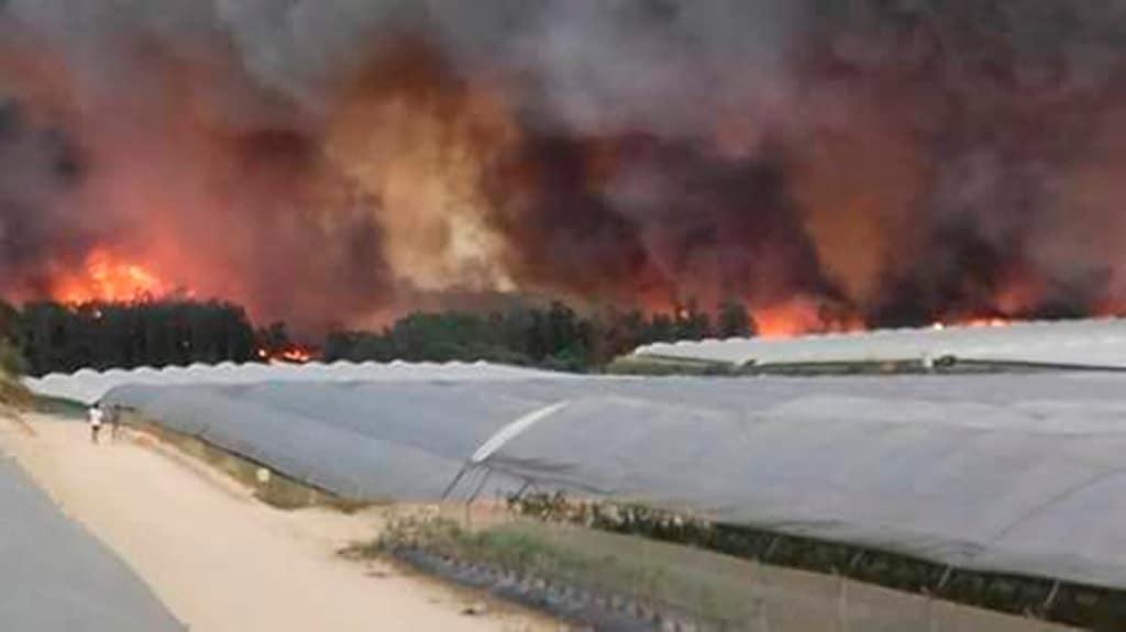 Indignación contra los que acusan a los agricultores de provocar el incendio del entorno de Doñana en Huelva