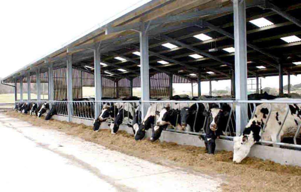 Las entregas de leche de vaca subieron en mayo, pero no el precio al ganadero