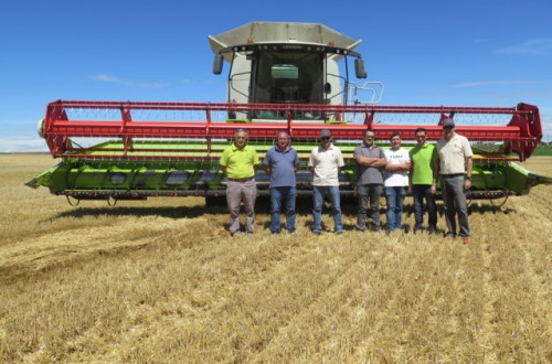 Claas Lexion 780 Terra Trac, capacidad de trabajo con gran calidad de cosecha