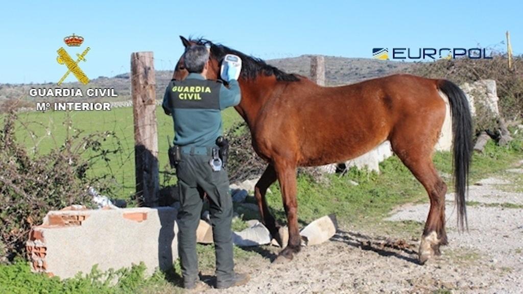 El Seprona desmantela una red de venta en Europa de carne de caballo no apta para el consumo