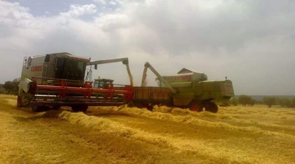 El COPA-Cogeca prevé estabilidad y 298 Mt de cereales en la UE en la campaña 2017/18