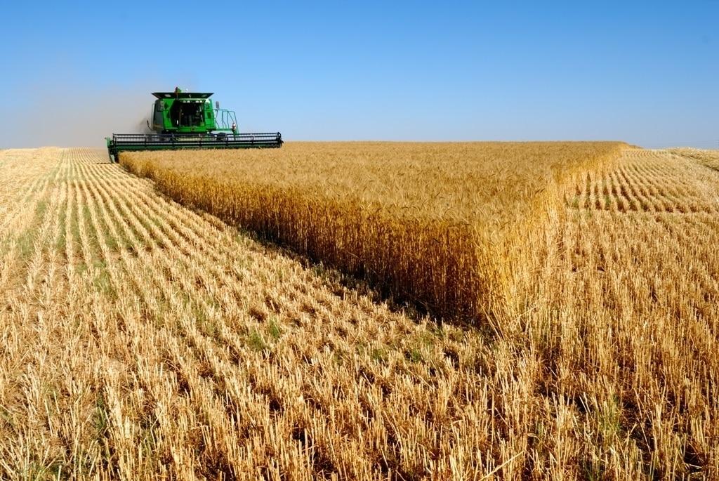 El  Mapama prevé  unos 7 Mt menos de cosecha de cereal de invierno que en la campaña anterior