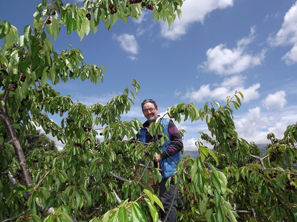 Inspectores de Tailandia se interesan por la cereza de Aragón y Extremadura