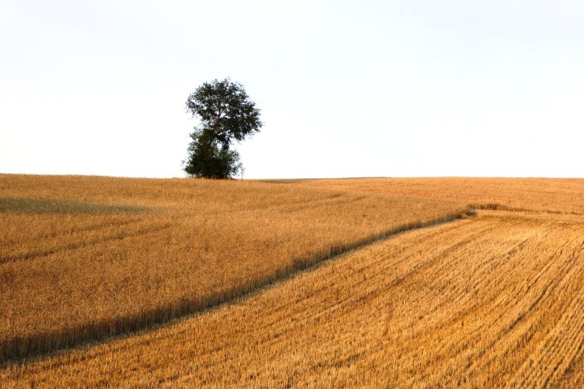 Bruselas estima una producción de cereales de 298 Mt, inferior a la media de los últimos años
