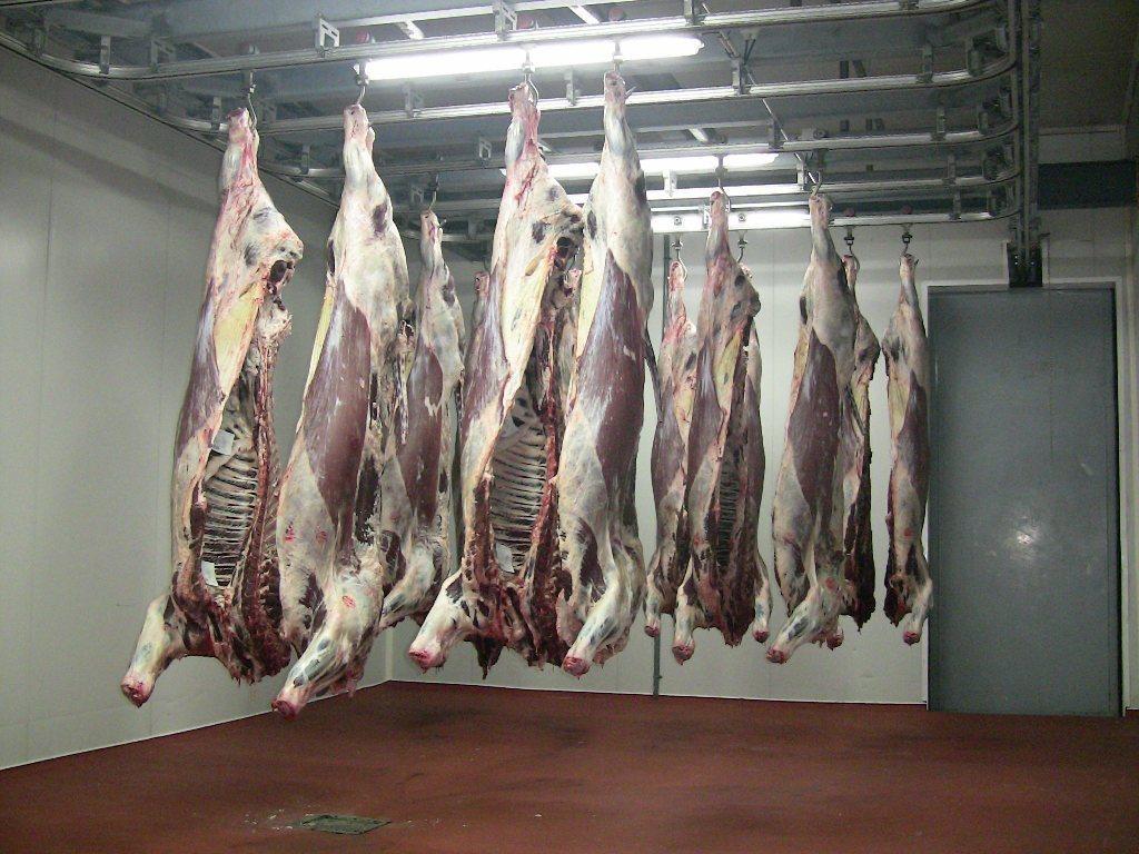 Revisión de las normas de clasificación de la UE de canales de vacuno, porcino y ovino