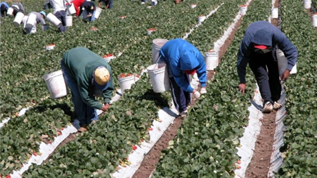 Sube el paro, baja la afiliación en el sector agrario en junio por la sequía y el fin de algunas campañas