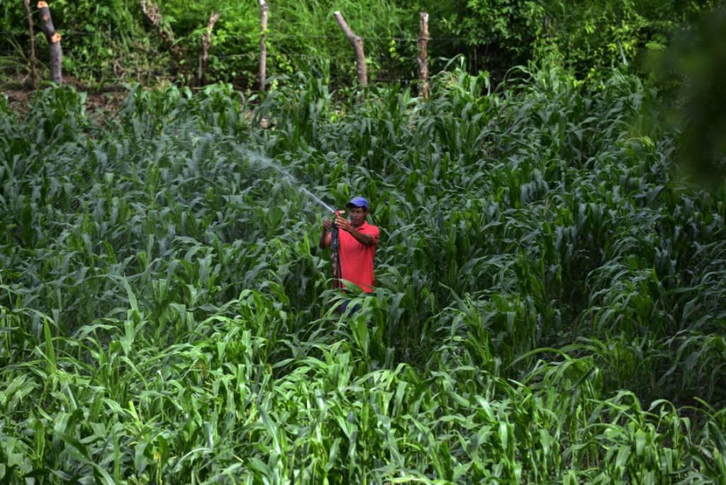 El índice de precios de los alimentos básicos de la FAO volvió a subir en junio por lácteos y cereales