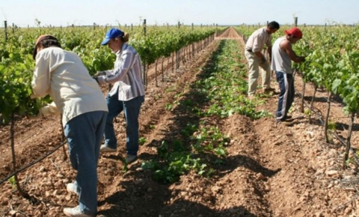 El paro en el sector agrario cae el 5,4% en el segundo trimestre y se sitúa en 206.000