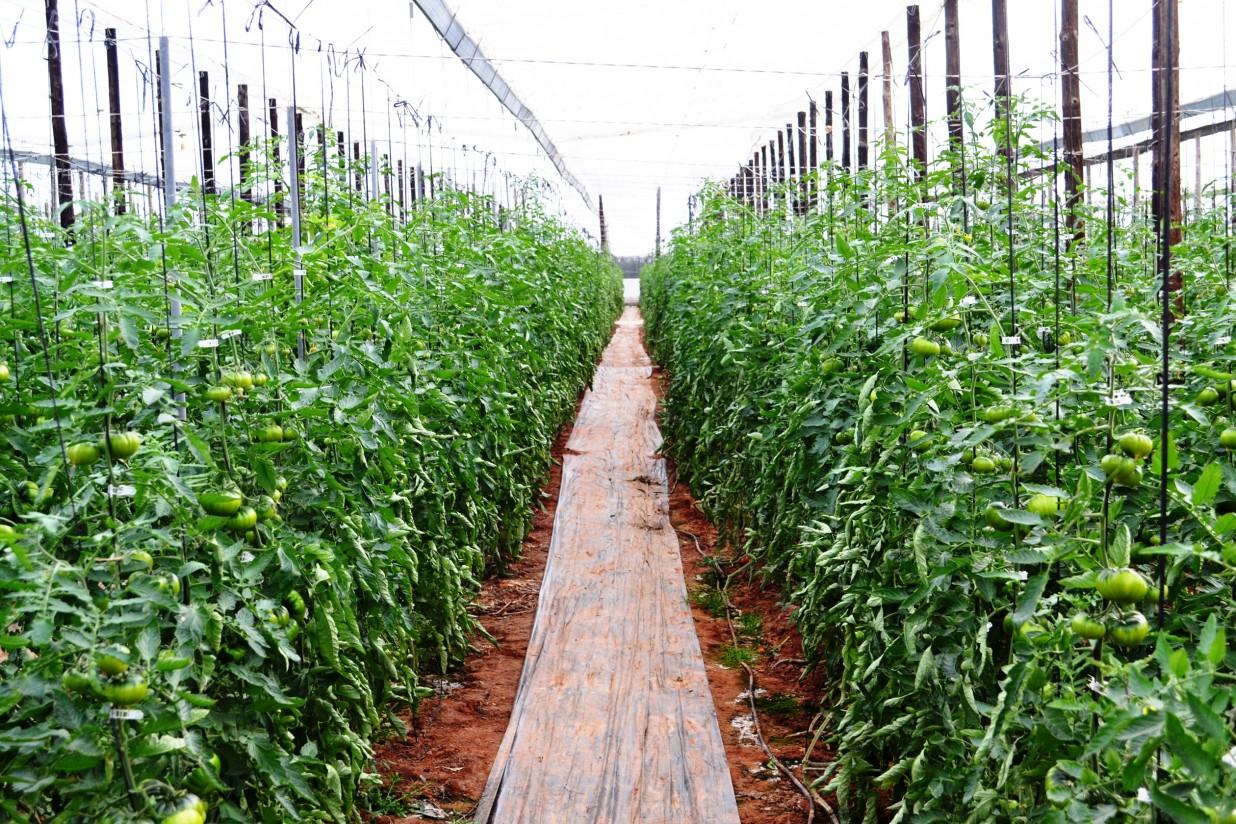 Holanda organiza en Almería una jornada sobre la horticultura como sector circular de la economía