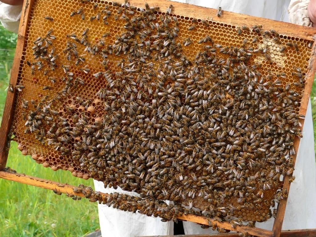 El Senado exige al Gobierno más apoyo para el sector apícola y mejor trazabilidad de la miel
