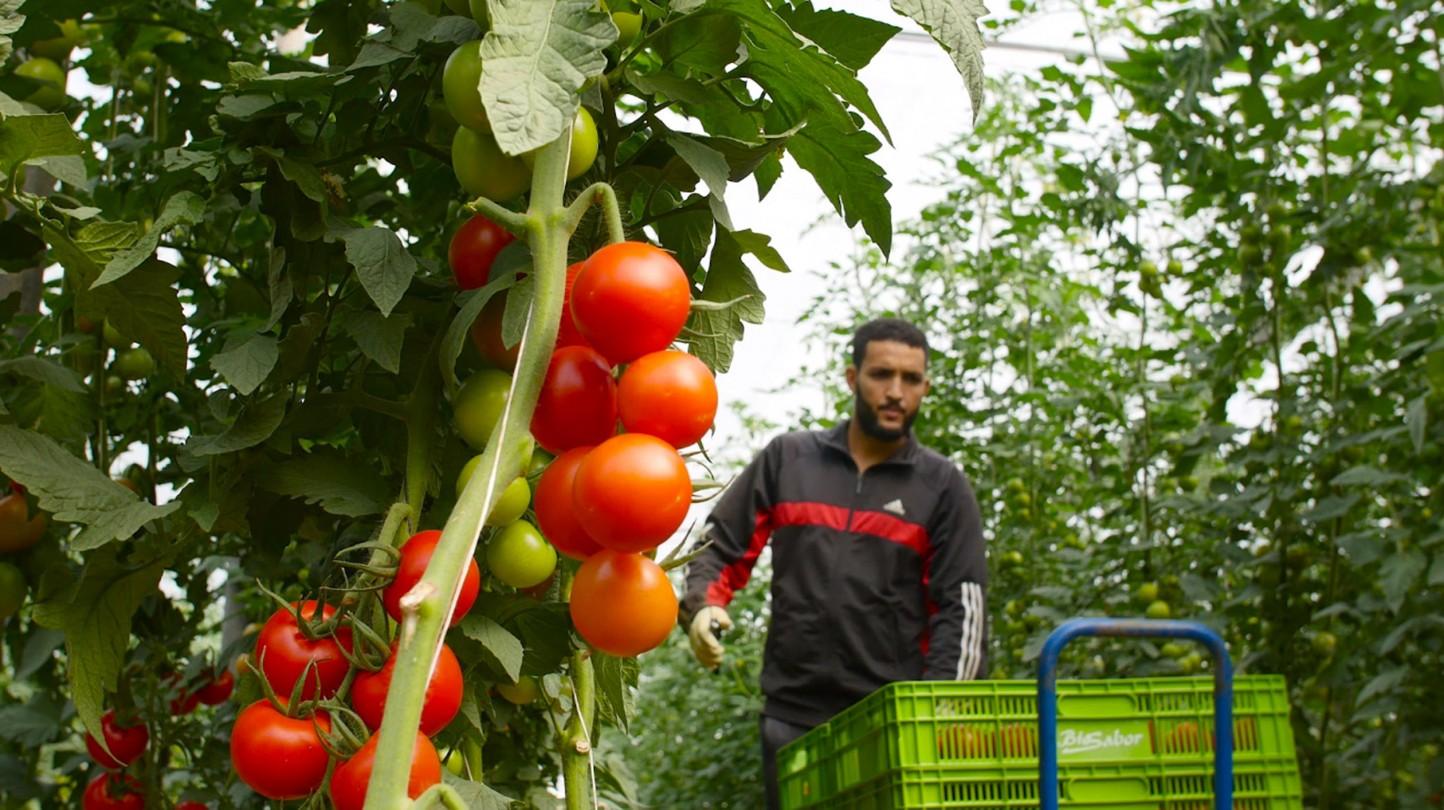 Triodos Bank financia 33.000 hectáreas de superficie agrícola ecológica en toda Europa