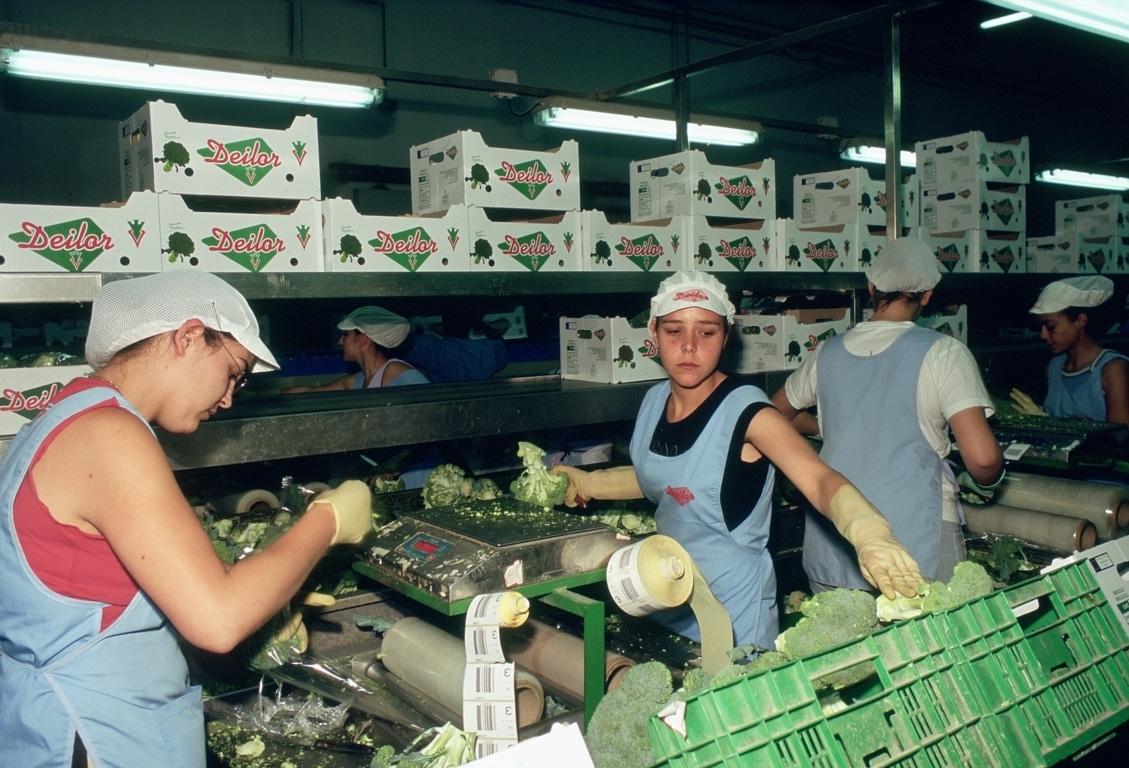 El Mapama incluirá tres nuevas medidas de gestión de crisis por las OPs de frutas y hortalizas