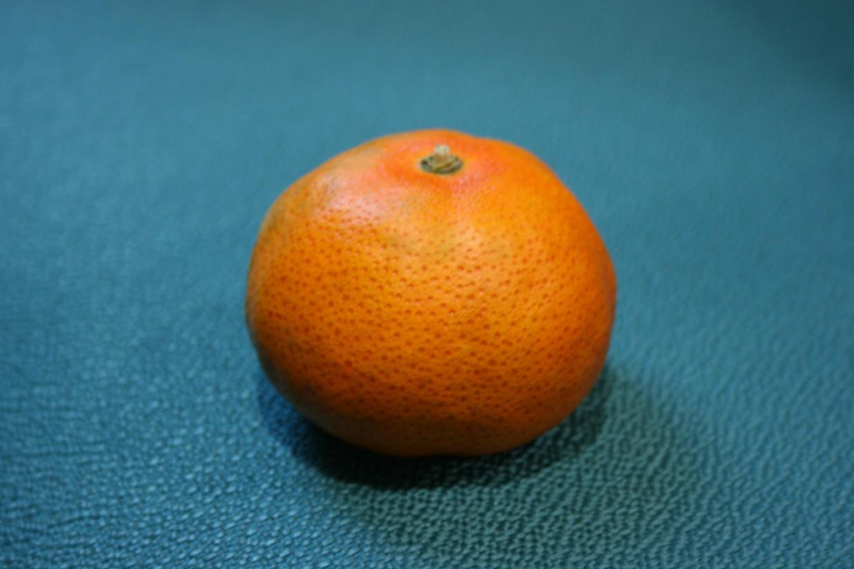 AVA-ASAJA denuncia la introducción clandestina de una mandarina en la C. Valenciana