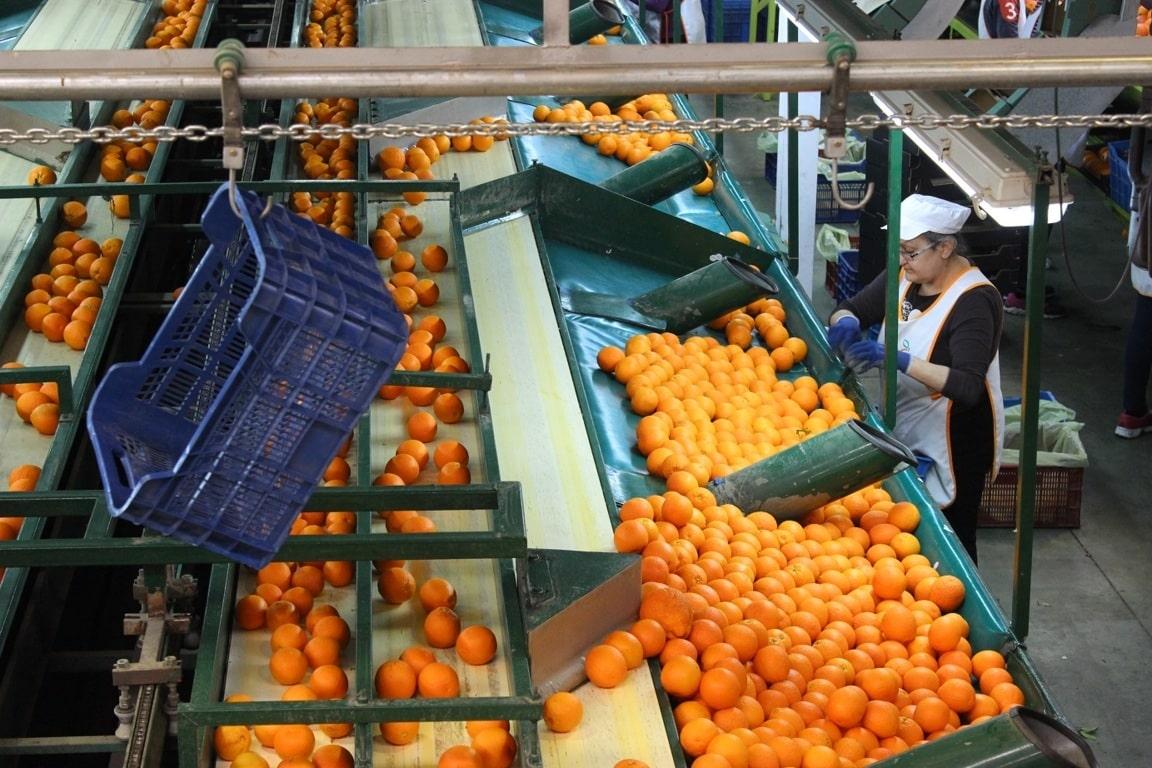 Andalucía aprueba la norma para reconocer a las Entidades Asociativas Prioritarias agroalimentarias