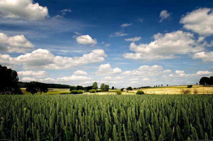 Fertilización nitrogenada en cobertera de cereal de invierno