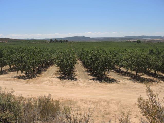 Situación actual de los frutos secos en España