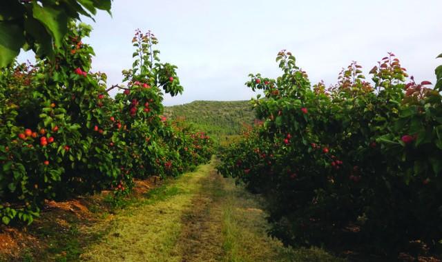Frutas David