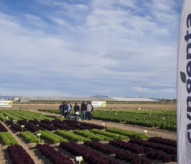 Taegro, el nuevo biofungicida de Syngenta también para hortícolas en invernadero y al aire libre
