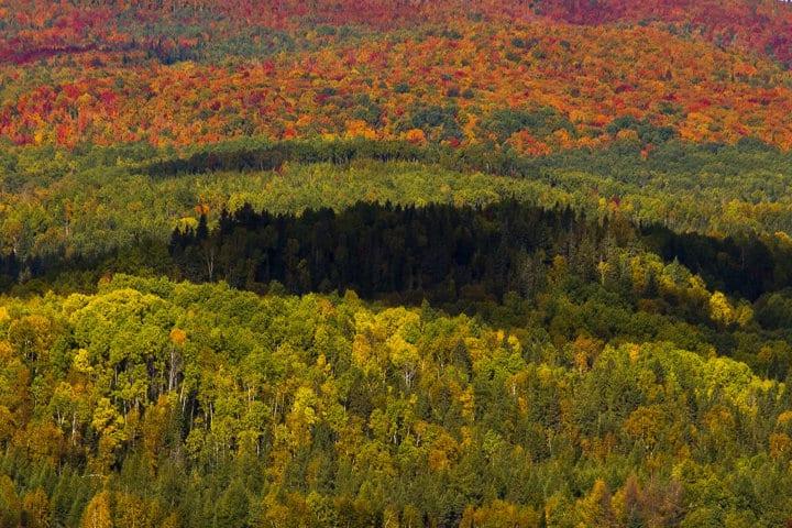 La biomasa, una prioridad frente al cambio climático. Por Jaime Lamo de Espinosa