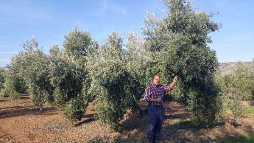 Antonio Lozano, un agricultor convencido de la eficacia de los fertilizantes de Yara para el olivo