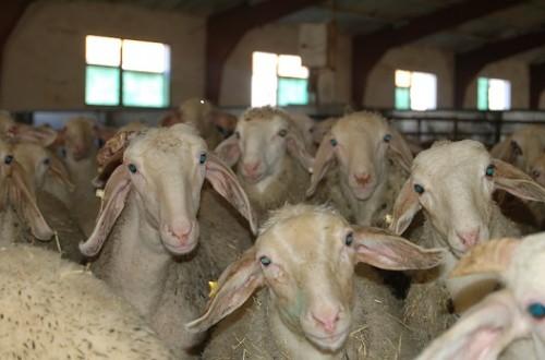El impacto de las enfermedades emergentes en la sanidad animal