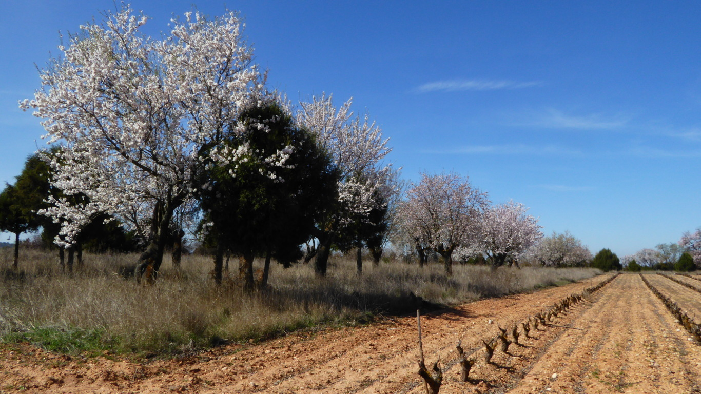 Las limitaciones inherentes del régimen de pago básico de la PAC para los agricultores