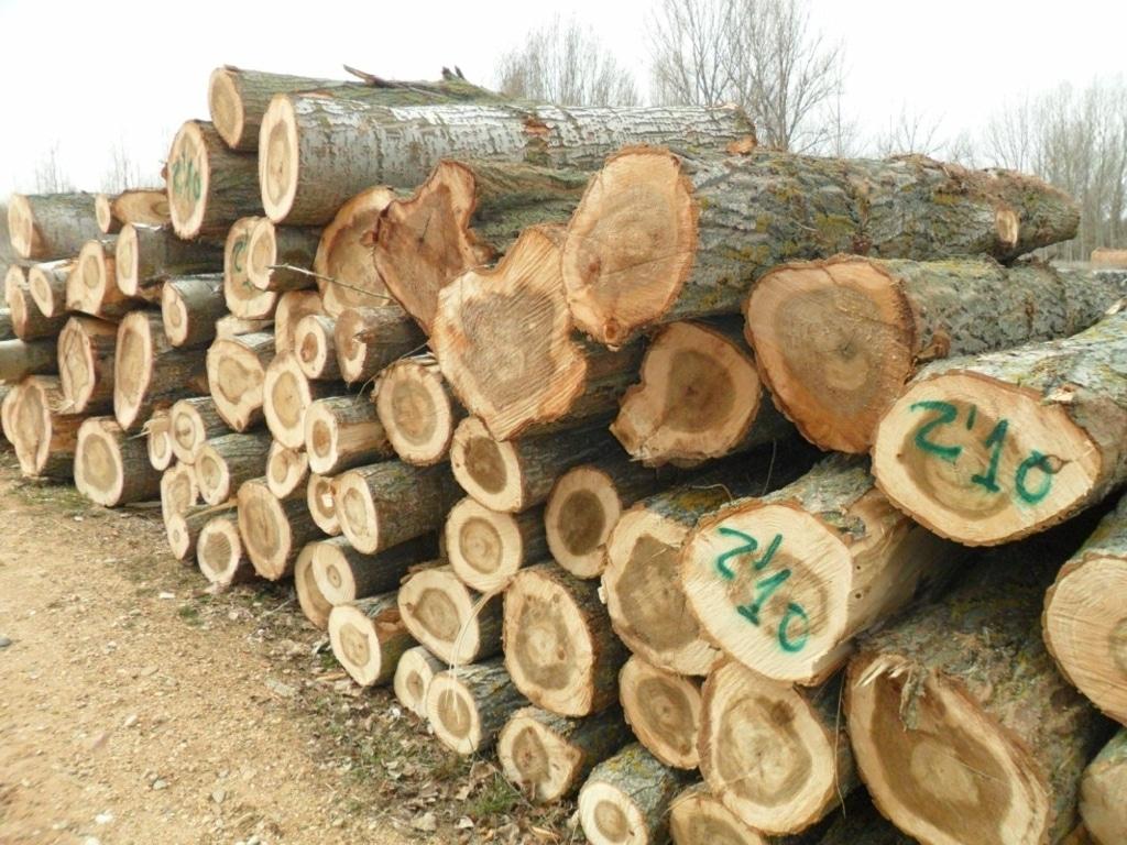 II Simposio Nacional del Chopo, cita sobre la importancia de la populicultura en la industria de la madera