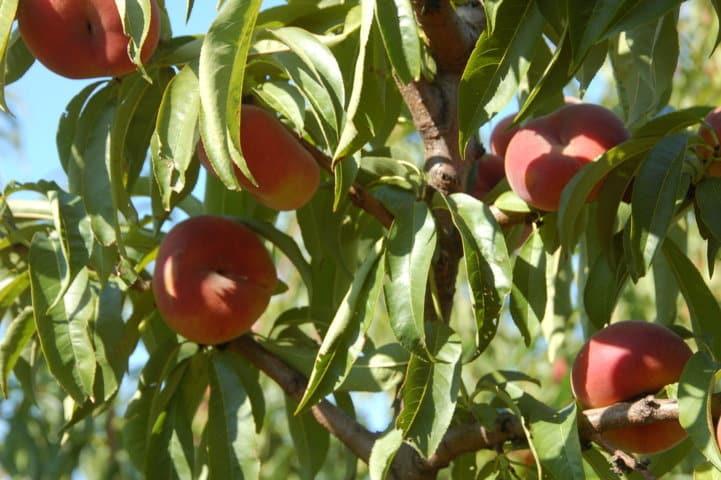 Mejora de la fertirrigación con el uso de inhibidores de la nitrificación