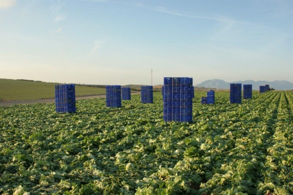 Agricultura presenta tres proyectos normativos para concentrar más la oferta hortofrutícola