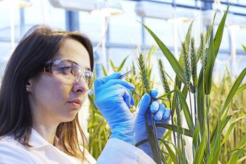 """La CE permite la compra por BASF de parte del negocio de """"Crop Sciencie» de Bayer"""