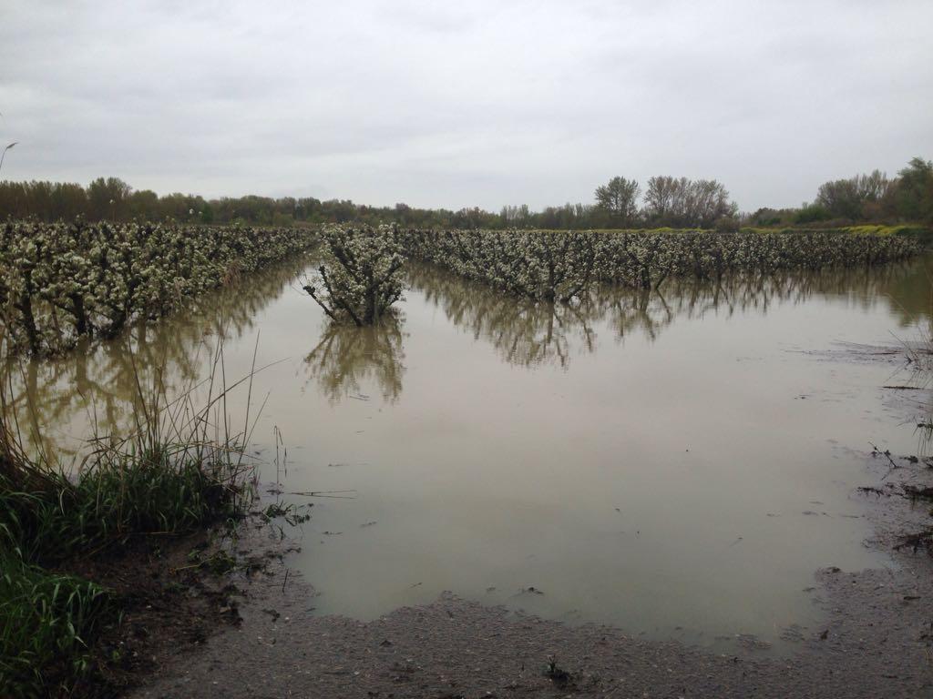 Agroseguro prevé indemnizaciones millonarias por daños en el agro ante la crecida del Ebro