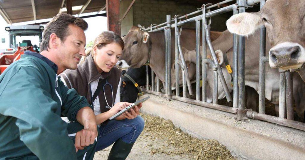 Control electrónico de uso de antibióticos en explotaciones de ganado para producir alimentos de consumo humano