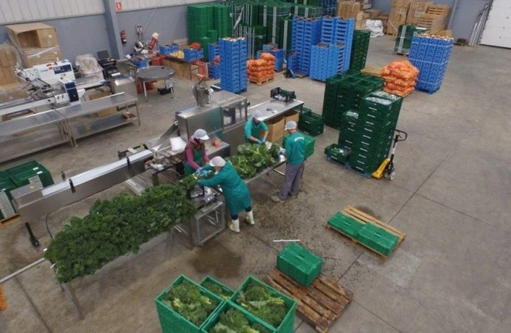 Las cooperativas agro-alimentarias españolas facturaron 30.992 M€ durante 2016