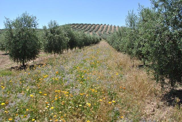 Hacia una necesaria integración eficaz entre agricultura y apicultura